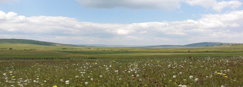 panorama_3